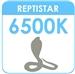 Avant_Repitstar